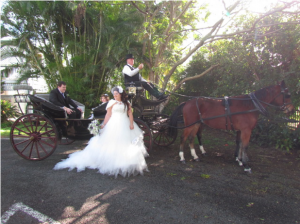 My Wedding Carriages Hervey Bay